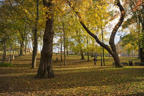 new autumn fall leaves saint john person golden outdoor brunswick newbrunswick burial loyalist grounds saintjohn nikond3300 loylaistburialgrounds