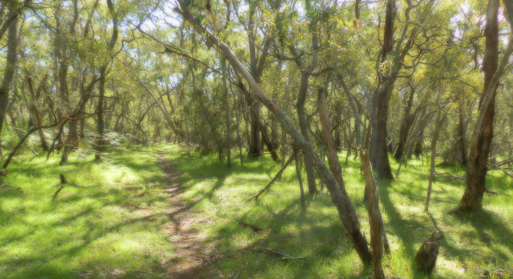 Penambol Conservation Park walking trail, Mount Gambier, Limestone Coast