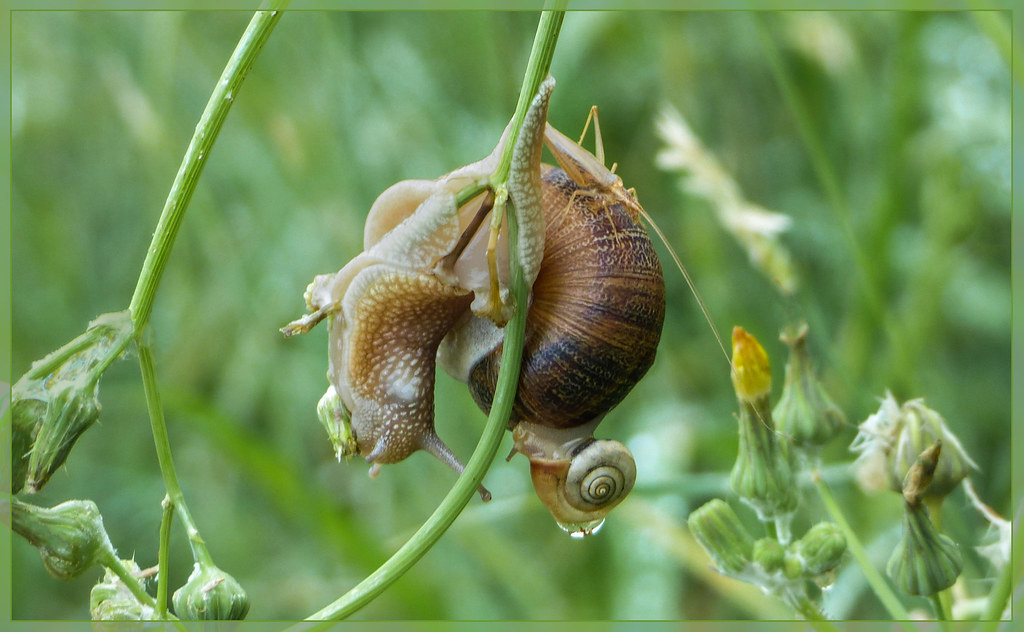 Escargot transport en commun - Pays basque espagnol
