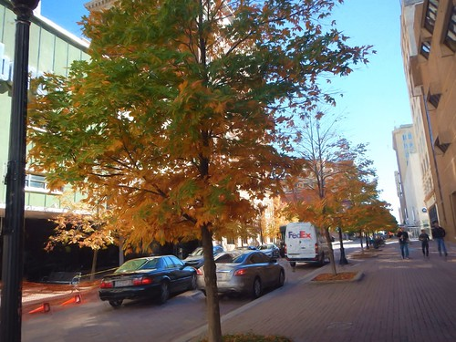 Downtown Fall Color Impressions Van Gogh II 55pct