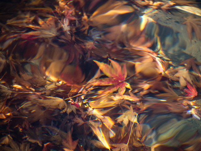 underwater autumn leaves