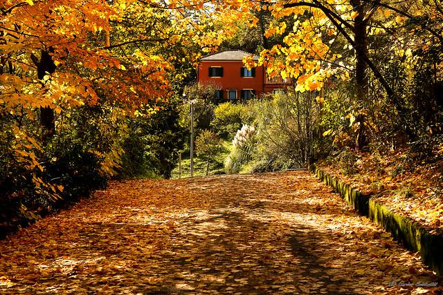 Bonjour Autumn