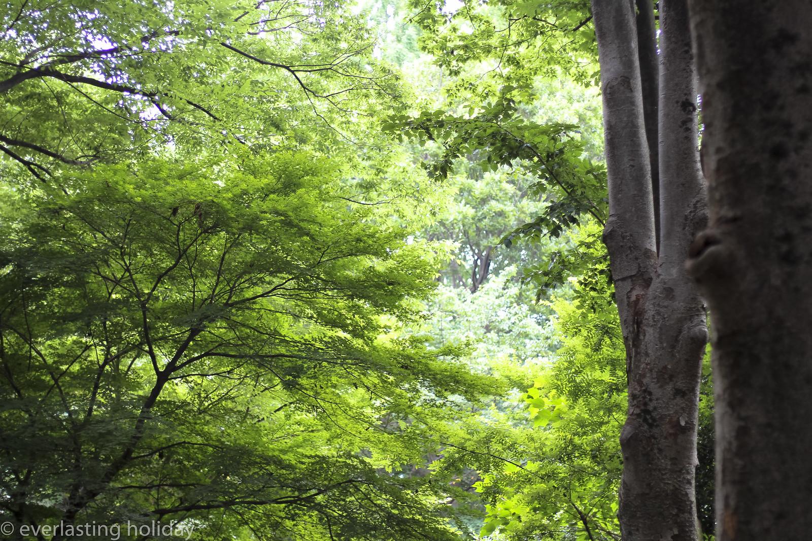 小金井公園 Koganei Park-0006