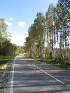 Road of birches