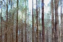 Forêt en filé. Explore.
