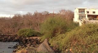 galapagos beach property