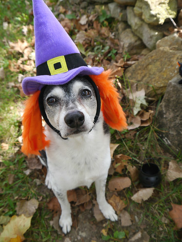2015-09-24 - Peedee Witch (Redux) - 0016 [flickr]