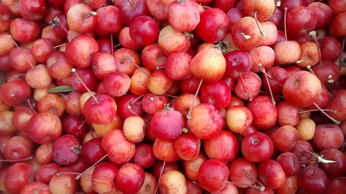 Crab apple harvest