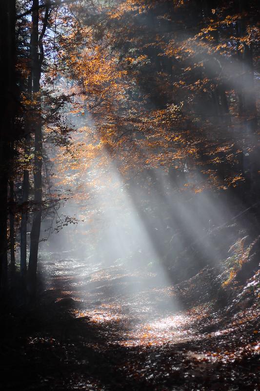 Merveilleuse rando dans les Vosges 22800832995_db7ab8b463_c