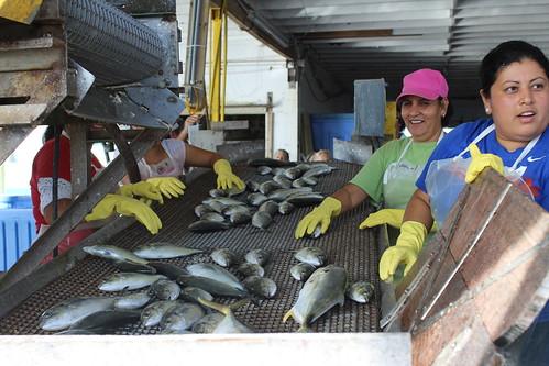 NWWWS & Cortez Fishing Village