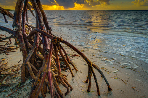 park morning red beach clouds sunrise keys key long state florida roots mangrove hdr prop
