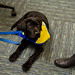 120115_RenderTheServiceDog-0009