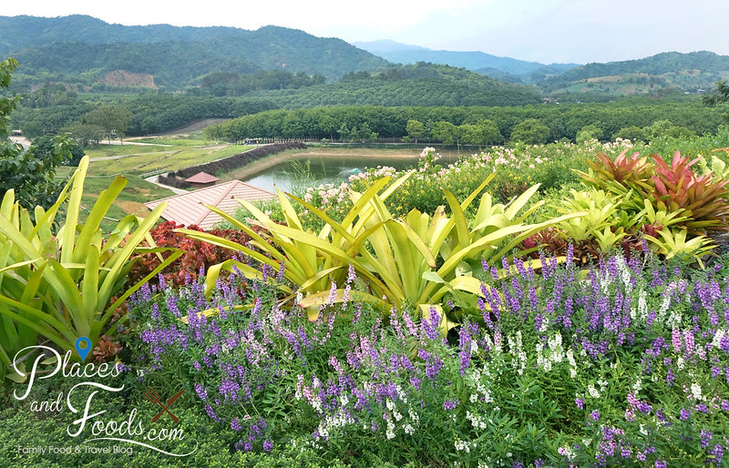 singha park flower paradise