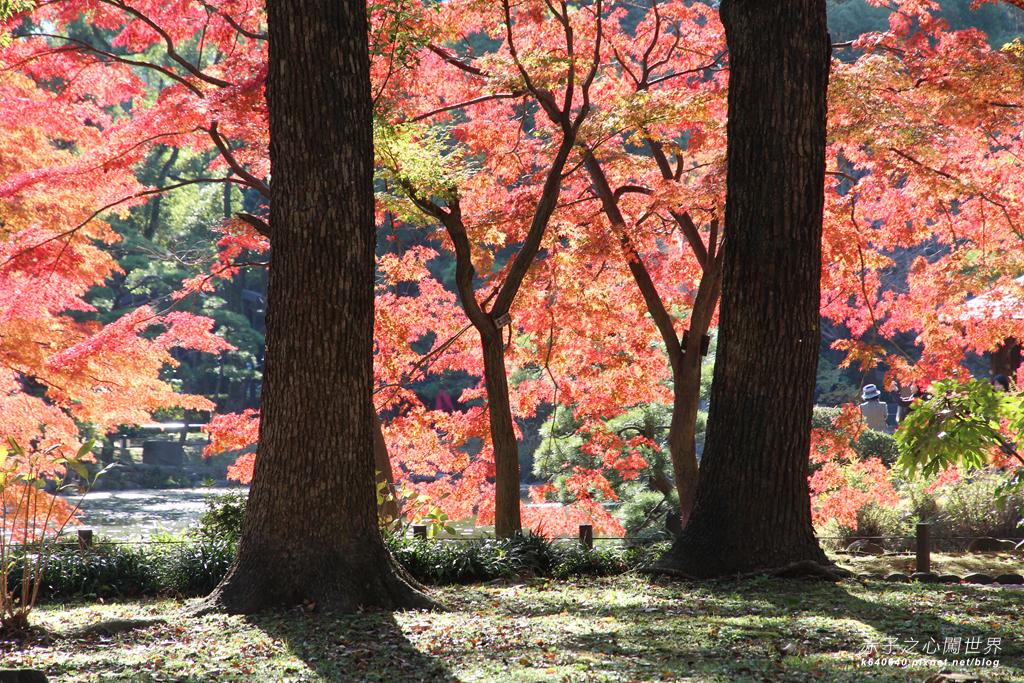 東京賞楓-日比谷公園46