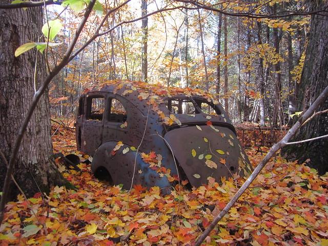 Autumn Camouflage, Canon POWERSHOT ELPH 100 HS