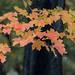 Fall colors by jon.atli