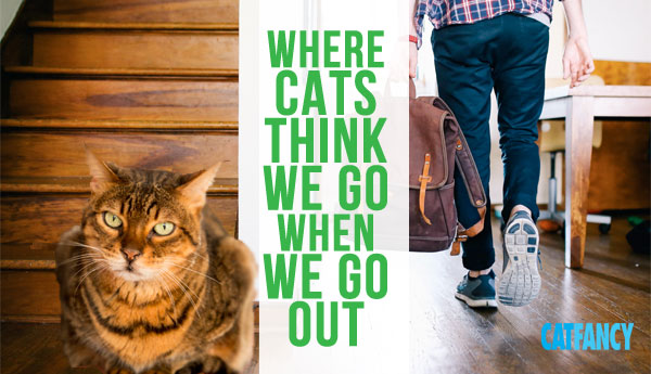 cats-think-we-go-when-we-go-out