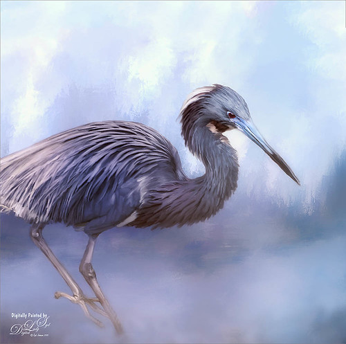 Painted image of a Tricolored Heron