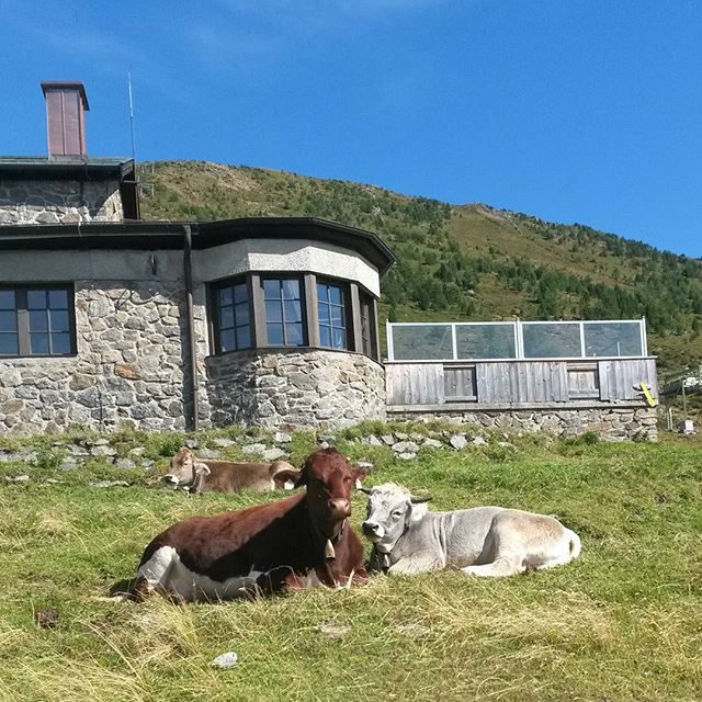 lehmäpari, Patscherkofel, Innsbruck, Itävalta