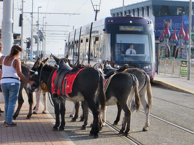 Blackpool Donkeys Tram
