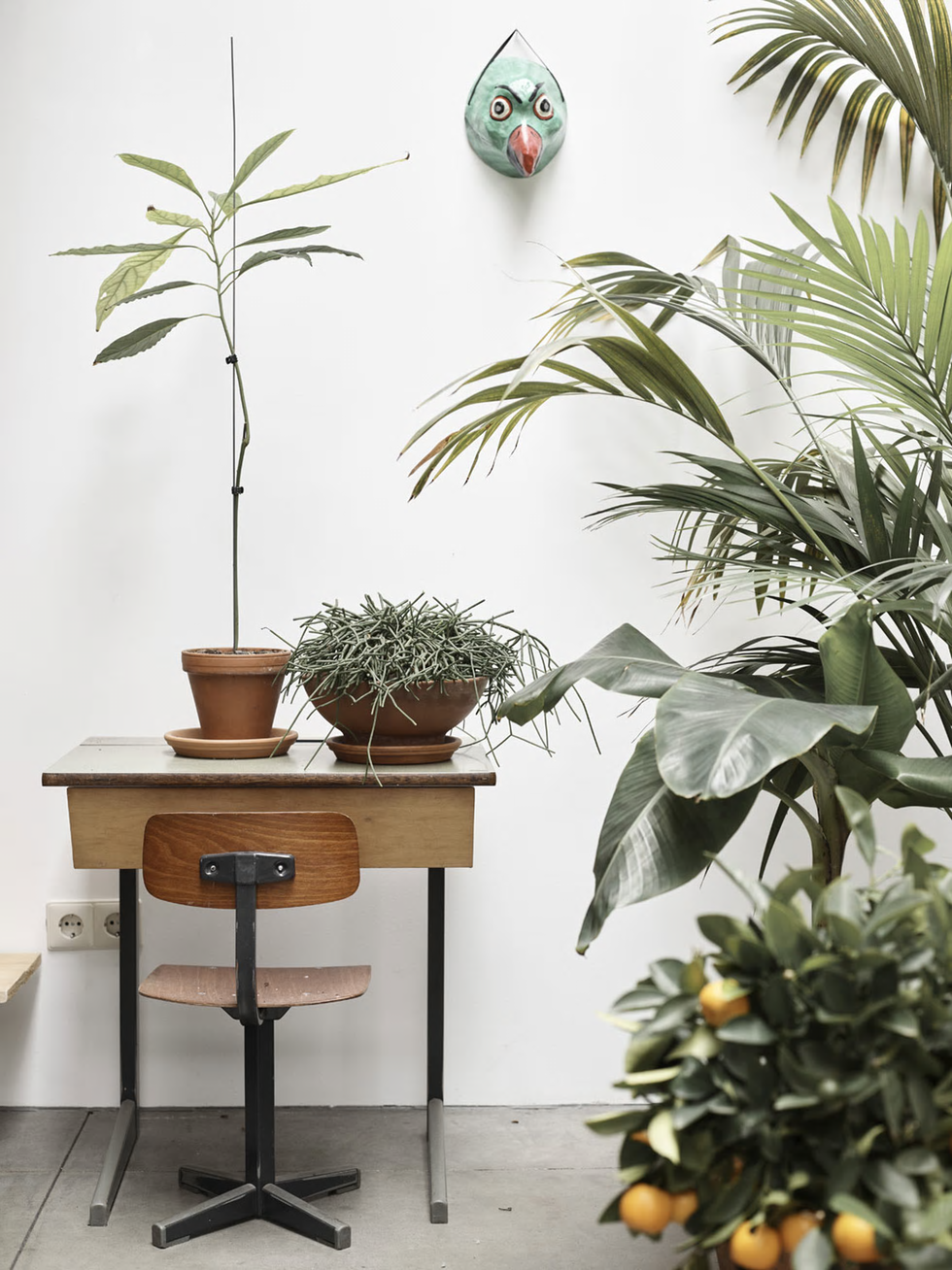 06-plantas-de-interior