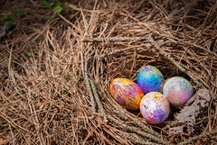 nest, grass, bird nest, food, easter egg, egg,