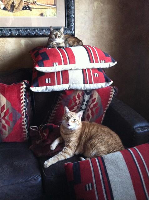 Traveling Kitties - SantaFe, NM