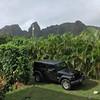 Jurassic Park(ing) #nofilter #kauai #hawaii