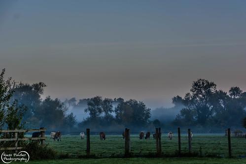 mist sunrise england oxfordshire europe uk blewbury unitedkingdom gb