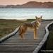 Boardwalk Companion by catchlightdon