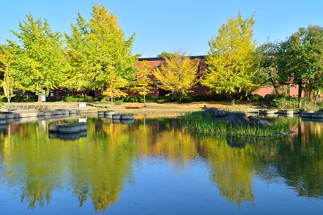 石橋文化センターの秋