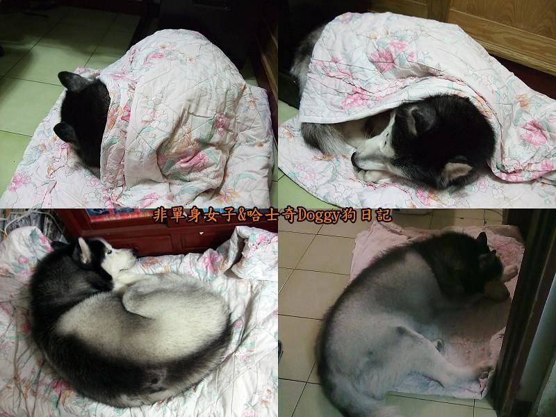 Doggy保暖墊07