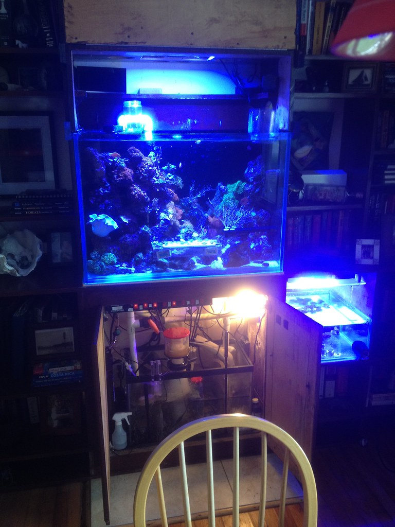 Fs 60 Gallon Setup Reef Central Online Community