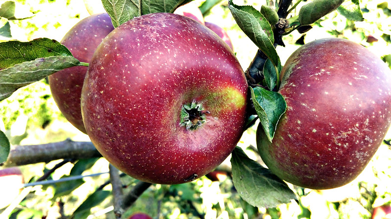 Apple day 2016-apple10