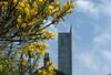 Tall building and yellow plant in Manchester