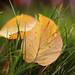 le foglie in autunno by rino_savastano