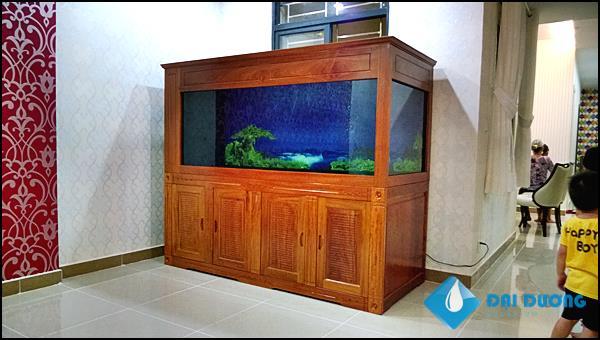 Hồ cá rồng chị thanh quận 7