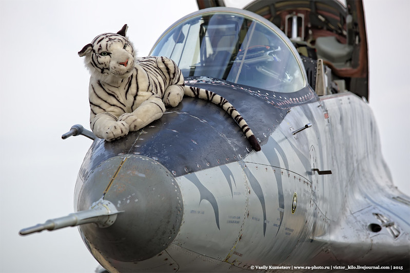 Baby tiger on a mother tiger from Slovak Air Force