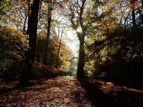 More autumn 3