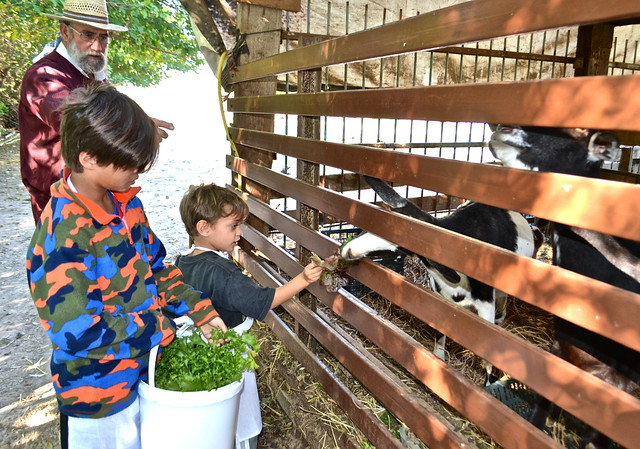 petting farm - Barraca Toni Montoliu - Authentic Paella Cooking - valencia