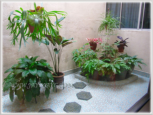 Our courtyard filled with mostly foliage/variegated plants, Dec 15 2015