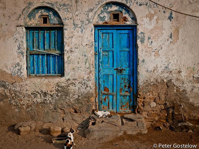 Berbera cats