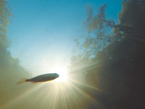 guanacaste costarica cr underwater fish river
