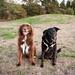 two of my favorite hooligans by Bordadorhund