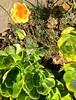 """Athens Avalon Green Space"", San Francisco, staircase, poppies"