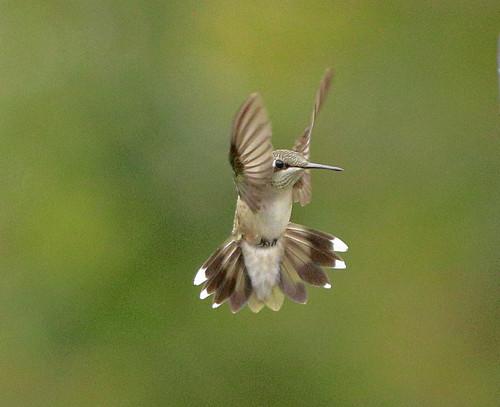 Flying Hummer.jpg
