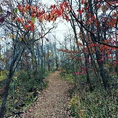 Path  #Fall #seasons #park #leaves #path
