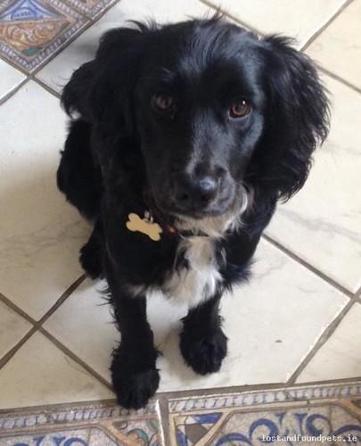 Fri, Sep 25th, 2015 Found Male Dog - Betwen Kilkerrin & Moylough, Kilkerrin, Galway