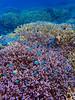 Kerama Islands by AILINK