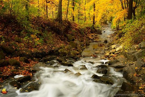park autumn ny newyork fall nature colors leaves yellow forest flow buffalo woods rocks foliage ravine yates westernnewyork wny orchardpark etbtsy